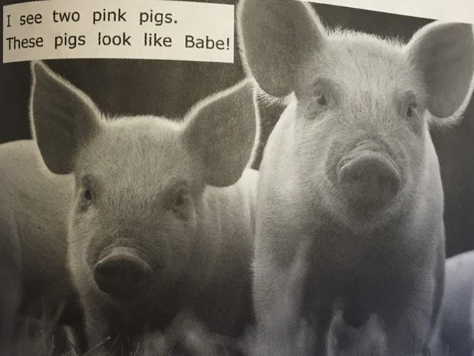 imagem de porco e texto curto.