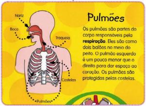 desenho e explicaçãp de um corpo humano e função dos pulmões.